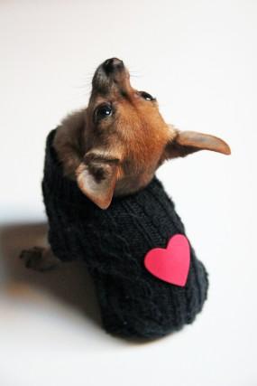 valentine-dog-sweater