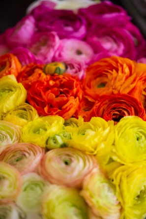 yellow-orange-pink-ombre-ranunculus