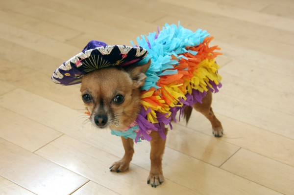 DIY Dog Pinata Costume