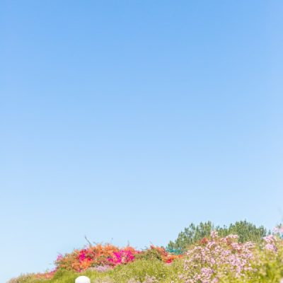 A Visit To The Flower Fields at Carlsbad Ranch