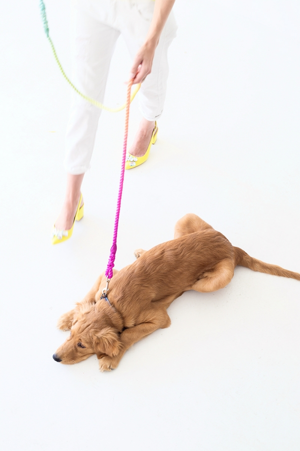DIY Technicolor Dog Leash