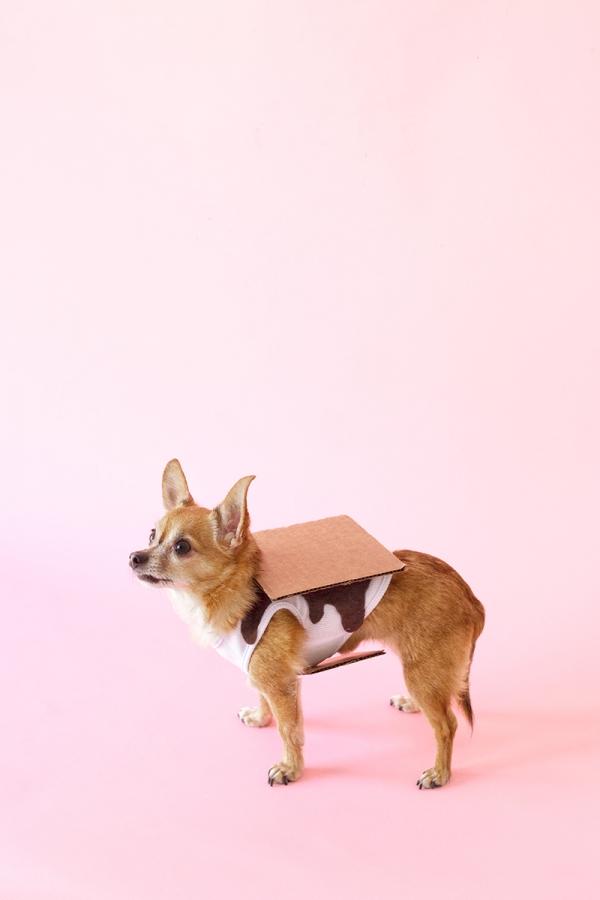 DIY S'mores Dog Costume | studiodiy.com