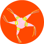 Piñatas Image