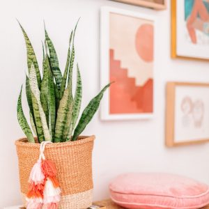 Where To Buy Baskets (My Favorite Sources!)