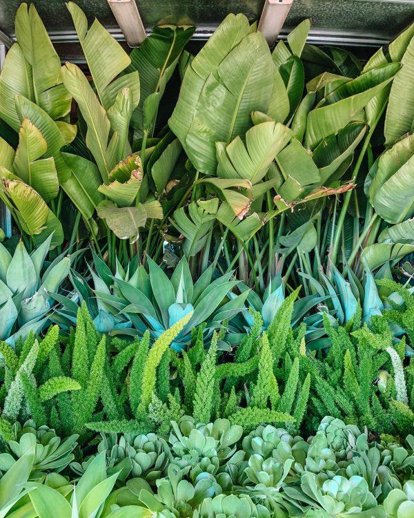 California Backyard Plants