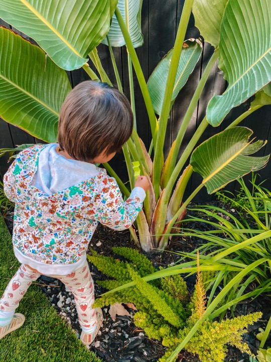 Toddler Camp: Bugs Day (Themed Activities and Crafts)