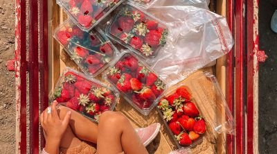 California Strawberry Picking