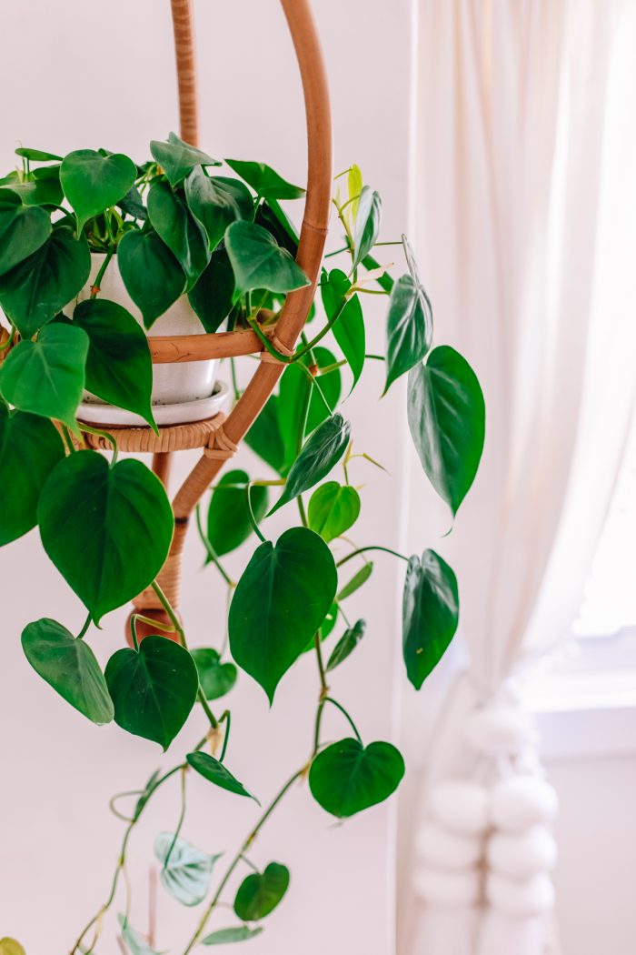 Hanging plant in a rattan Jungalow plant holder